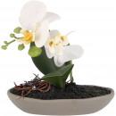 grossiste Plantes et pots: Phalaenopsis d'orchidées dans un bol en ...